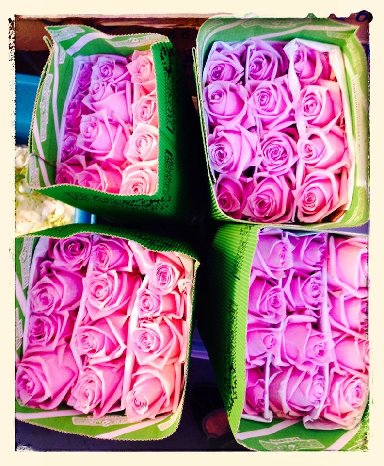 Boxes of Freshly Picked Roses By Sheila Hayes